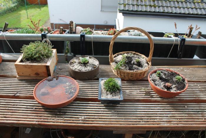 Nachher: Steingartenpflanzen encore.