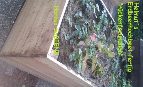 Hochbeet Erdbeeren Im Hortus Bundeswettbewerb Der Initiative
