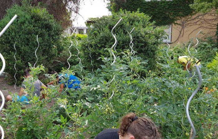 Unkraut rupfen und Herbststauden einpflanzen.