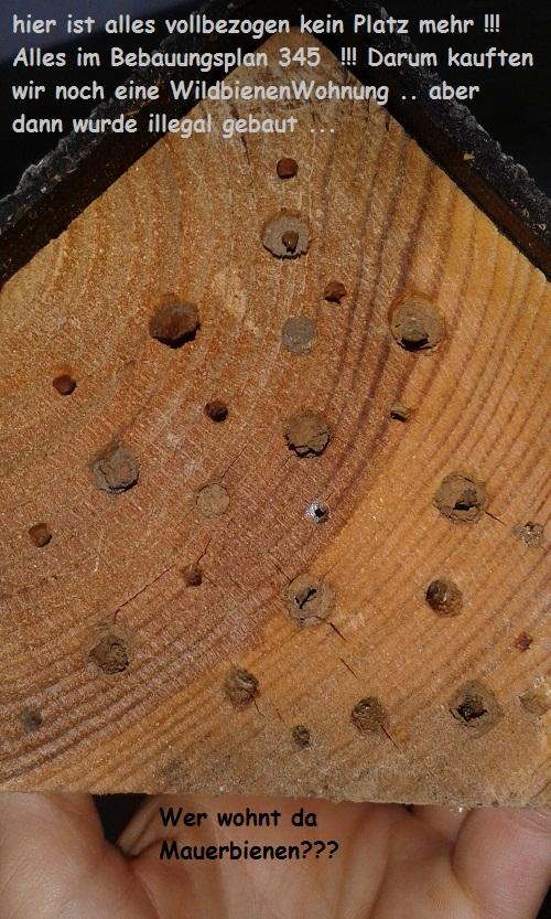 Wer wohnt da Mauerbienen – fast voll belegtes Haus!!!