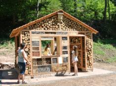 XXL-Wohnzimmer für Insekten – leicht zu besichtigen durch Menschen