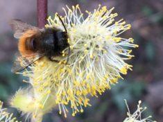 Lecker Bienenschmaus!