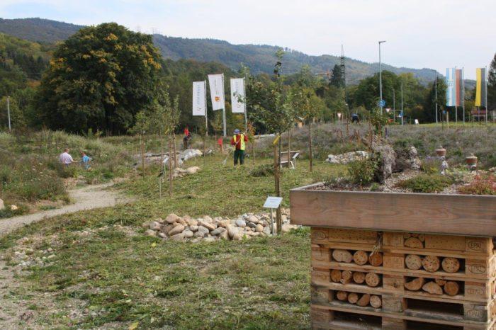 Natur-Erlebnispark Novartis: Zwiebelpflanzaktion