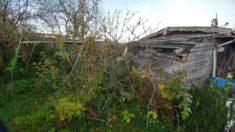 Vorher: Garten bei Übernahme