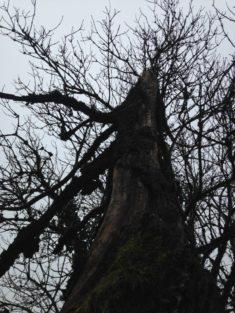 Naturgarten Hotzenwald im Januar: Totbaum im Garten